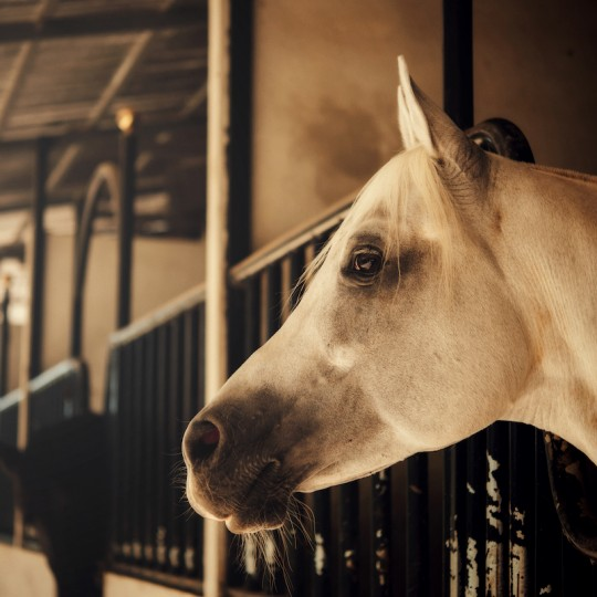 Horses and Pets Insurance